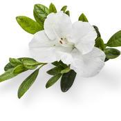 bloom-a-thonwhite01.jpg