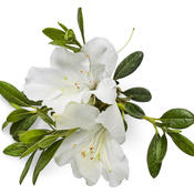 bloom-a-thonwhite02.jpg