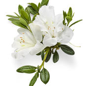 bloom-a-thonwhite03.jpg