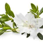 bloom-a-thonwhite04.jpg