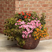 brickhouse_garden_59_everly1.jpg