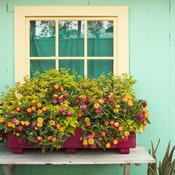 caribbean_patio_scene_169.jpg
