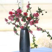 chaenomeles_double_take_pink_vase.jpg