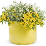 combo_yellow.jpg