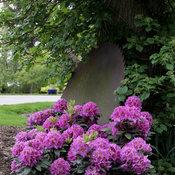 dandy_man_purple-4597.jpg
