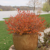 double_play_big_bang_spirea-0667.jpg