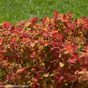 double_play_big_bang_spirea-5254.jpg