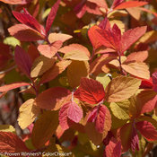 double_play_big_bang_spirea-5257.jpg