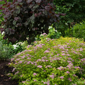 double_play_big_bang_spirea-7400.jpg