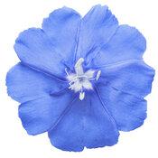 evolvulus_blue_my_mind_xl_macro_01.jpg