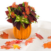 Fall Cut Flower Combo A