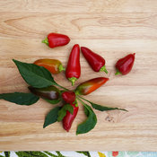Fire Away™ Hot and Heavy - Hot Pepper - Capsicum annuum