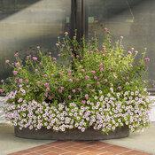 front_porch_garden_117.jpg