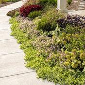 front_porch_garden_221.jpg