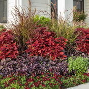 front_porch_garden_283.jpg
