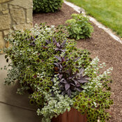 front_porch_wood_windowboxes_11.jpg