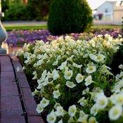 garden_answer_bordeaux_lemoncello3.jpg