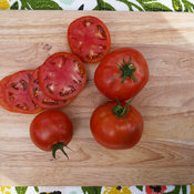 Tempting Tomatoes™ 'Garden Treasure' - Lycopersicon