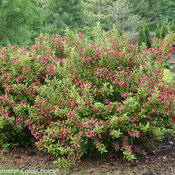 ghost_weigela-6789.jpg