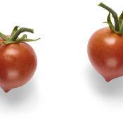 goodhearted_tomato_macro_04.jpg