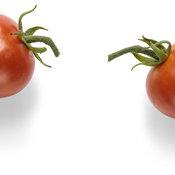 goodhearted_tomato_macro_05.jpg
