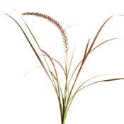 Graceful Grasses® 'Fireworks'