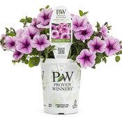 PW grande Supertunia® Mini Rose Veined