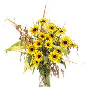 helianthus_suncredible_saturn_cut_flower_arrangement.jpg