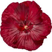 hibiscus-cranberry-crush-02.jpg