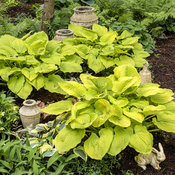 hosta_coast_to_coast_03.jpg