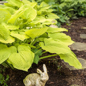 hosta_coast_to_coast_10.jpg