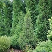 juniperus_gin_fizz_1.jpg