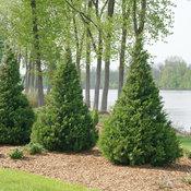 juniperus_gin_fizz_4.jpg