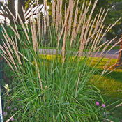karlfoersterorngrass-landsc.jpg