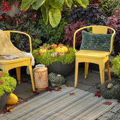 lemon_coral_in_fall_13_copy.jpg