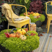lemon_coral_in_fall_20.jpg