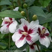 lil_kim_hibiscus-2.jpg