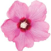 lil_kim_red_hibiscus.jpg