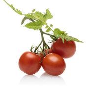lycopersicon_tempting_tomatoes_garden_gem_macro_03.jpg