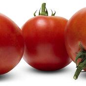 lycopersicon_tempting_tomatoes_garden_treasure_macro_03.jpg