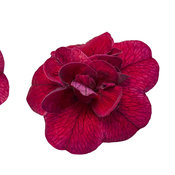 macro-superbells-double-ruby-01.jpg