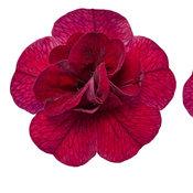 macro-superbells-double-ruby-02.jpg