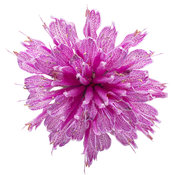 monarda_leading_lady_orchid_05.jpg