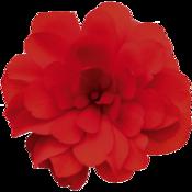 Nonstop® Joy Red - Tuberous Begonia