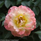 oso_easy_italian_ice_rose-5733.jpg