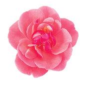 oso_easy_pink_cupcake_rosa.jpg