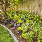 perennials_garden_19.jpg