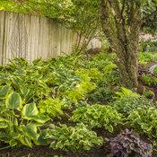 perennials_garden_29.jpg