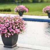 Vista Bubblegum by pool in NH