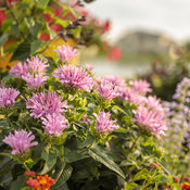 pollinator_patio_013.jpg